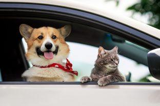 Come trasportare in auto il proprio animale domestico in maniera sicura?